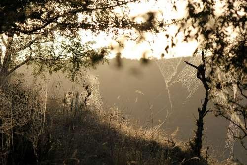 Landscape Sunlight Trap Forest Nature Trees Sky