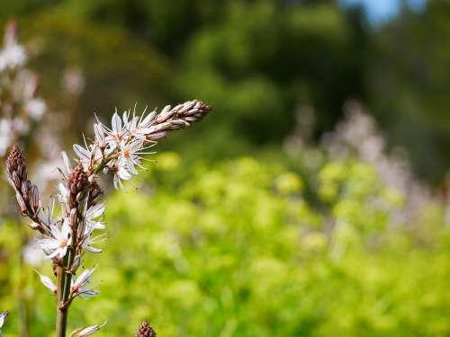 Nature Blossom Bloom Spring Flora Bloom