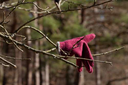 Nature Glove Tree Cold Plant