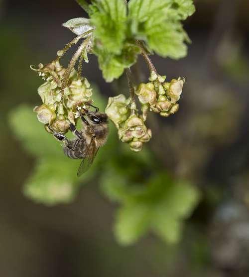 Nature Bees Honey Bee Macro Nectar Garden