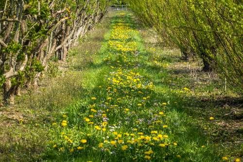 Nursery Flower Meadow Planting Plantation Away