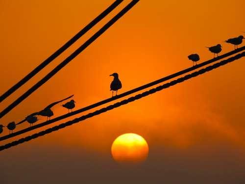 Offer Sunset Seagulls Birds Port