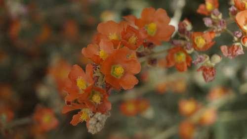 Orange Flower Bloom Nature Blossom Spring