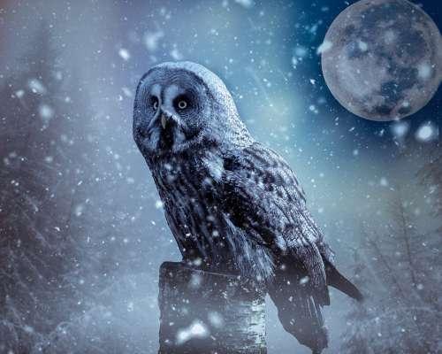 Owl Moon Atmosphere Nature Art Mystical Fog