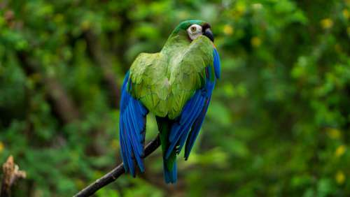 Parakeet Animal Grass Nature Pet Ecuador