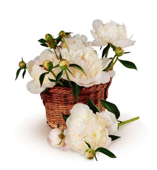 Peonies Bouquet Basket Flowers Big Isolated