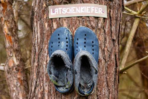 Pine Shoes Leather Old Tree Pair Mountain Pine