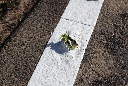 Plant Breakthrough Asphalt Power Live Growth