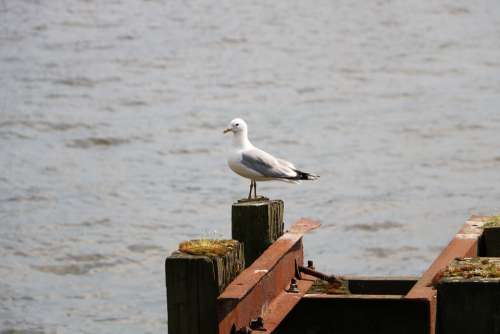 Port Seagull Sea Water Bird Nature Baltic Sea
