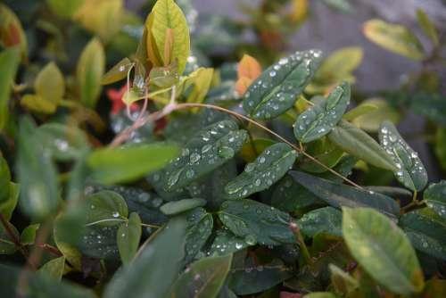 Quisqueya Leaves Leaf Tree Plant Foliage Forest