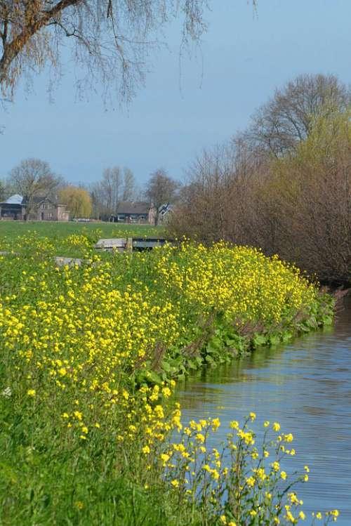 Rapeseed Spring Ditch Bloom Landscape Field
