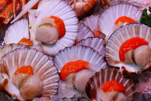 Scallops Seafood Food Shellfish Fresh Fish