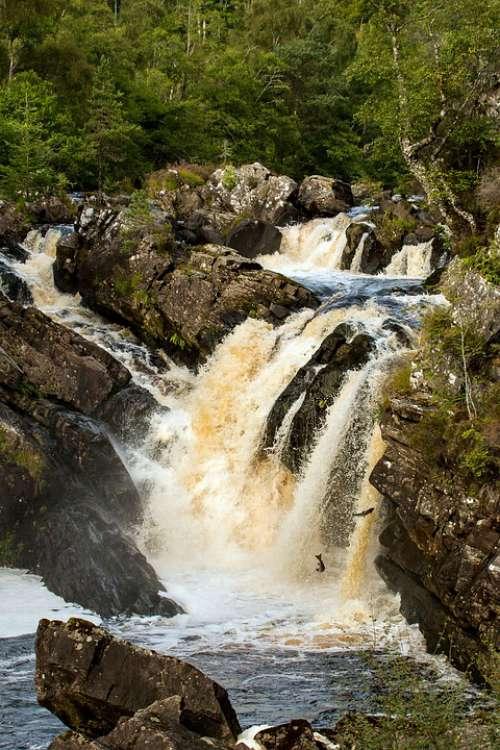 Scotland Salmon Rogie Falls Waterfall
