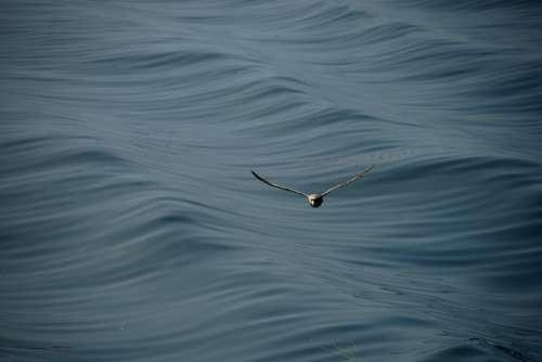 Seagull Sea Wave Ocean Animal Bird Water Flight