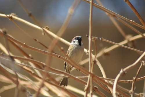 Sparrow Birds Brown Zoo Wing Korea