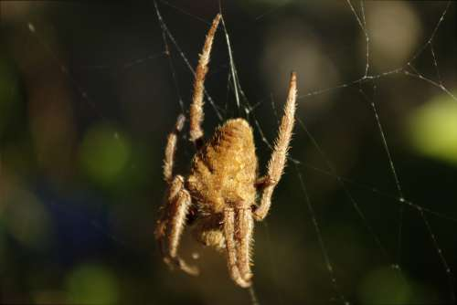 Spider Nature Arachnid Creature Outside
