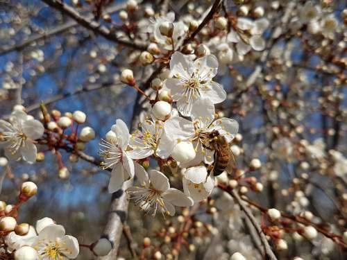 Spring Bee Blossom Bloom Vistula