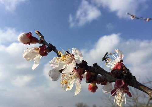 Spring Nature Flowers Bloom