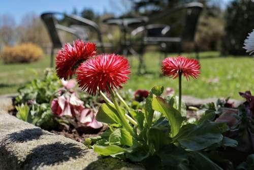 Spring April Flowers Garden