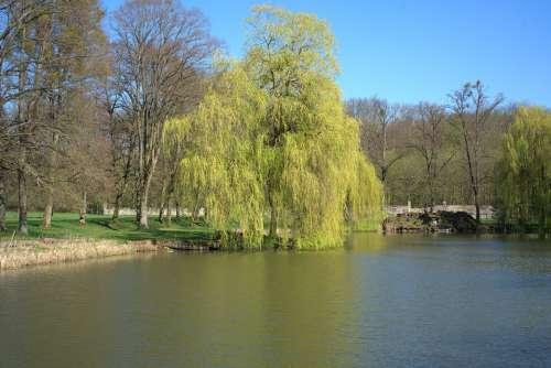 Spring Pond Calden Tree Lake Water Park Nature