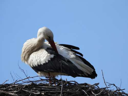 Stork Socket Spring Plumage Bird Figure Beak