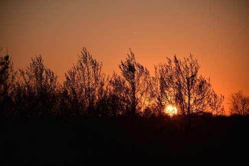 Sunset Trees Tree Evening Forest Sunlight Calm