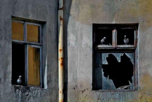 The Window Pane Pigeons Old