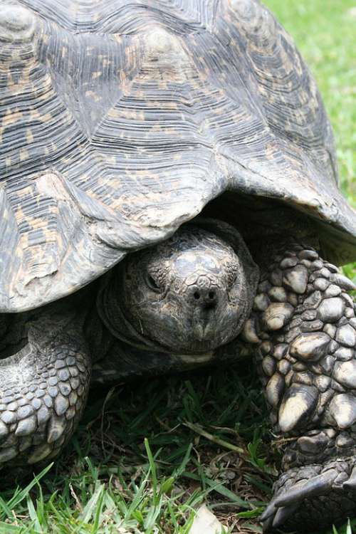 Tortoise Shell Wildlife Animals Slowly Slow