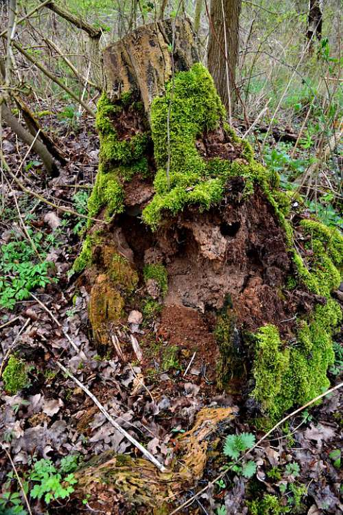 Tree Forest Moss Green Nature Wood Forests
