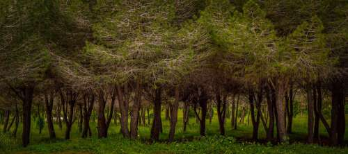 Trees Park Nature Landscape Forest Grass Scenic