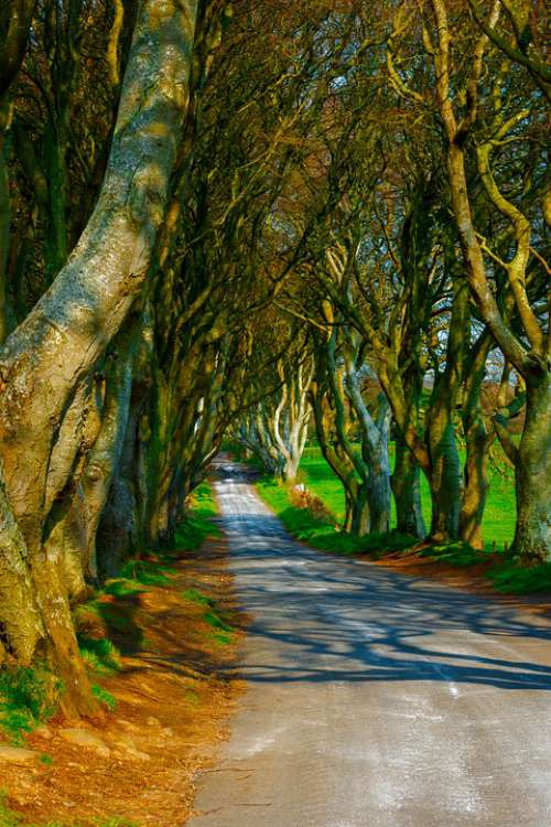 Trees Dark Hedges Ireland Road Mysterious Pathway
