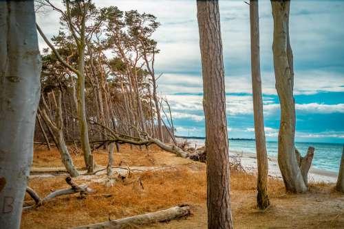West Beach Baltic Sea Trees Sky Clouds Beach