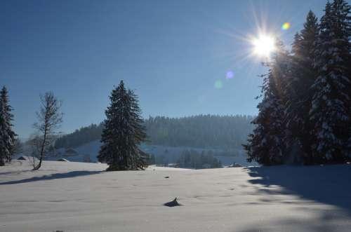 Winter Landscape Tree Snow Cold Sun Wintry