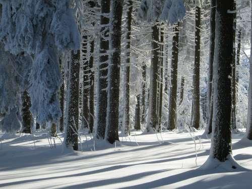 Winter Forest Landscape Snow Winter Nature Cold