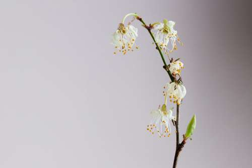 Withered Blossom Bloom Plant Nature Flower