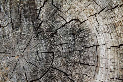 Wood Tribe Tree Log Nature Annual Rings Old
