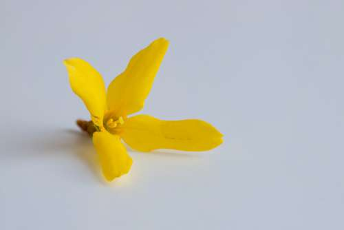 Yellow Blossom Bloom Flower Nature Summer Garden