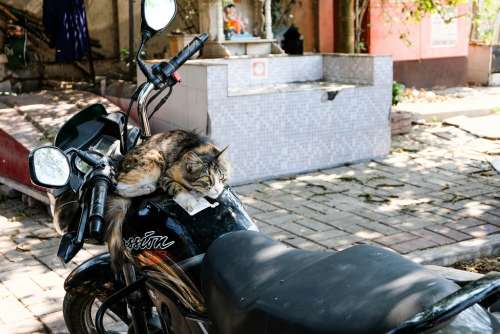 Cat Sitting on Motorcycle