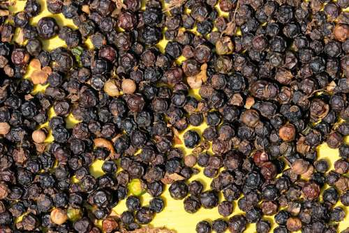 Raw Black Pepper on a Yellow Background