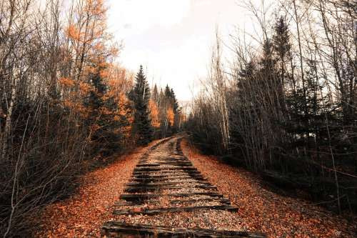 Abandoned Train Track Through The Woods Photo