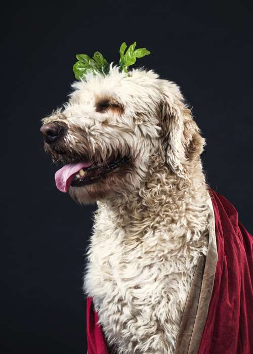 Dog In Velvet Cape Photo