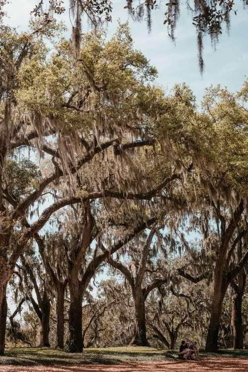 Friends Under A Mossy Oak Photo