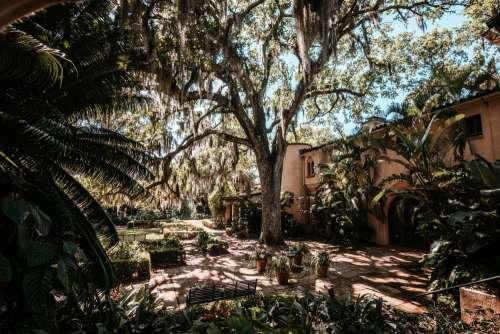 Light Creeps Through Branches Into The Lush Garden Photo