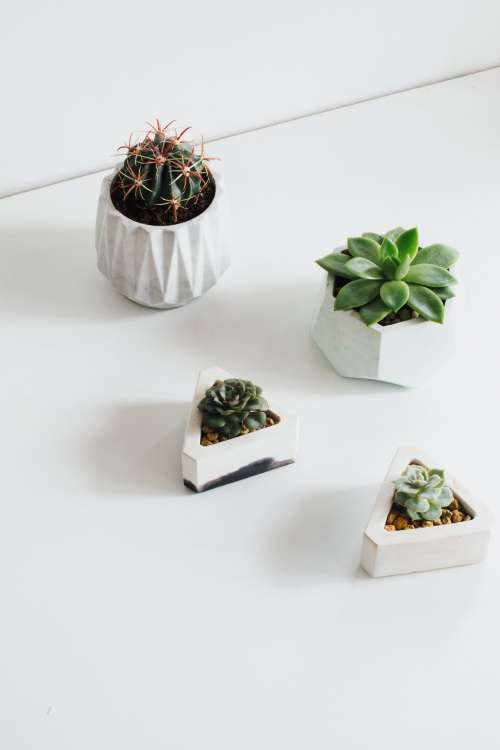 Minimal Decor Inspiration With These Tiny Plants Photo