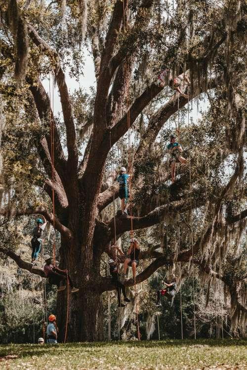 Mossy Tree Climbers Photo