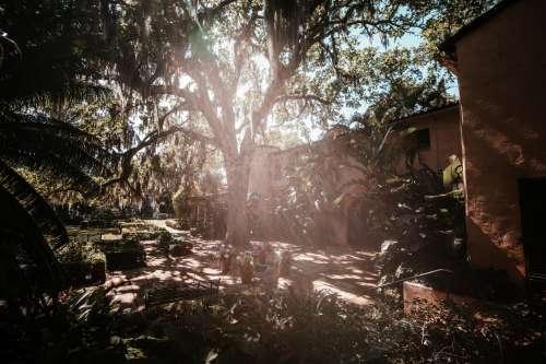 Sunlight Shines Through Large Mossy Tree In Lush Backyard Photo