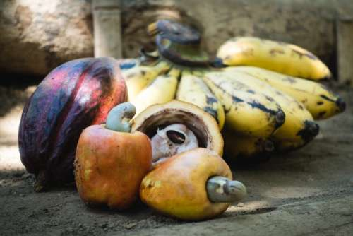 Raw cashew nuts fruit