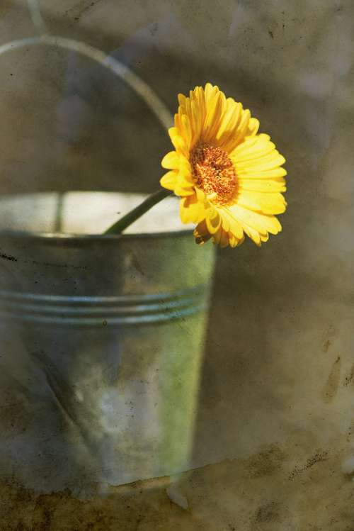 Vintage yellow flower in bucket