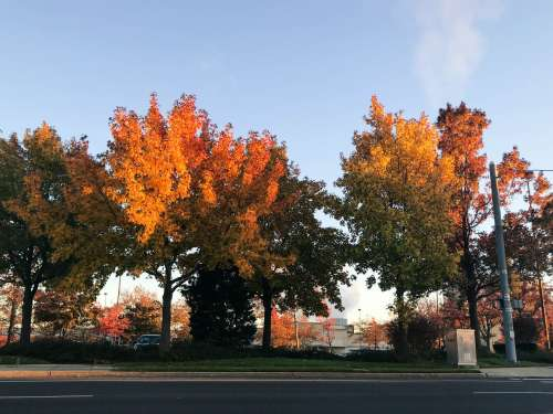 Colorful Fall Leaves on Trees