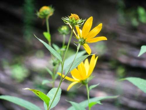 Yellow Flowers in Sun